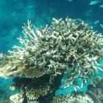 Marea Barieră de Corali a decedat în 2016