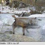 """Un vânător din Germania a """"pescuit"""" o vulpe captivă într-un bloc de gheață"""