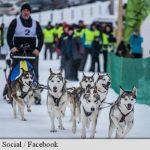 Zeci de câini nordici au făcut spectacol în Pasul Tihuța, la un concurs internațional de atelaje canine