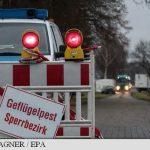 Germania eutanasiază 45.000 de păsări după descoperirea mai multor cazuri de gripă aviară