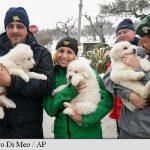 Italia: Trei cățeluși găsiți în viață în zona hotelului înghițit de avalanșă redeșteaptă speranțele salvatorilor