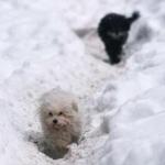 Zăpada cu gust de jambon i-a înnebunit pe câinii din localitatea slovenă Sezana