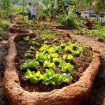 Propria fermă, soluţia pentru cei care vor să mănânce sănătos