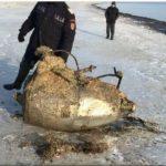 Piesa de avion descoperită pe plaja din Mamaia este un motor de rachetă