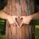 Forest Stewardship Council se disociază de Schweighofer