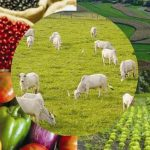 România, pe deficit în comerțul cu produse agroalimentare la 11 luni, în 2016; grâul domină exporturile, iar carnea de porc, importurile