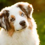 Câinii își pot da seama când cineva este nepoliticos