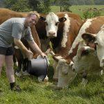 Fonduri in valoare de 189 milioane de euro vor fi alocate crescatorilor de animale