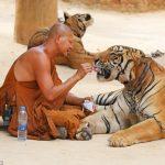 Controversatul templu al tigrilor din provincia thailandeză Kanchanaburi se va redeschide în câteva luni