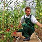 Fermierii români au solicitat fonduri europene de 330 de milioane de euro pentru investiții în exploatații agricole desi partea nerambursabilă este de maxim 50%