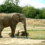 """Un rinocer alb a fost ucis de presupuși braconieri la o grădină zoologică din Franța, să sperăm că nu sunt """"români romi"""""""