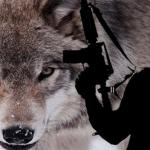 Presupușii 'lupi singuratici' ai Statului Islamic sunt pregătiți de 'instructori' pe internet