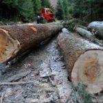 Zeci de percheziții la persoane bănuite de tăieri ilegale de arbori