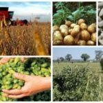 Ministerul Agriculturii plătește 2,58 milioane de lei unei firme de consultanță pentru evaluarea on-going a PNDR 2014-2020