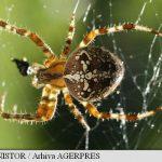 Oamenii de știință au descoperit modul în care poate fi tratată frica de păianjeni