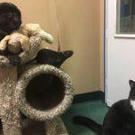 Un câine, o pisică și un șoarece, prieteni de nedespărțit, adoptați împreună de la un adăpost de animale din SUA