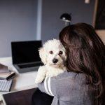 4 motive pentru care ar trebui sa iti duci cainele la locul de muncă în fiecare zi