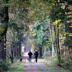 Pădurile germane duc lipsă de diversitate