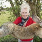 Un nou scandal pentru United Airlines: Un exemplar rar de iepure uriaș, găsit mort în cala avionului