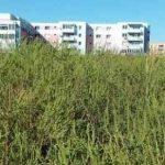 Cetăţenii au obligaţia de a întreţine spaţiul verde sau terenurile pe care le deţin sau le administrează
