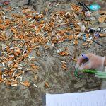Chiștoacele poluează solul