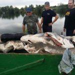 O tonă şi jumătate de peşti morţi, din cauza caniculei, într-o baltă din Sânnicolau Mare. Pompierii au intervenit 9 ore pentru reoxigenarea apei