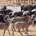 """Pământul se confruntă cu """"anihilarea biologică"""" a speciilor sale animale, a 6-a extincție în masă – deja în curs"""
