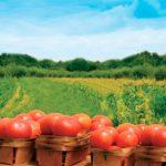 UE are dificultăți în a reforma agricultura bio