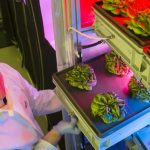 """Teste pentru """"legume spațiale"""""""