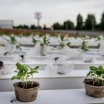Grădini urbane pe supermarket