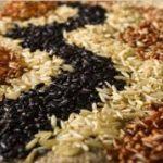 Se poate și așa: SUA vor exporta orez în China, cel mai mare producător, consumator și importator mondial