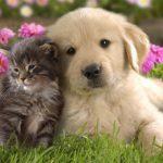 În zece ani vor apare gadgeturi de tradus limbajul câinilor si pisicilor