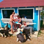 """Sortimente speciale de bere și înghețată, """"vedetele"""" meniului unui bar pentru câini din Croația"""