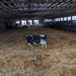 Avertizări privind lipsa laptelui în Germania
