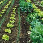 Agricultură bio crește în ritm susținut în Europa
