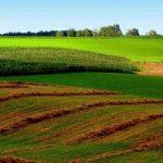 Deja suntem mai scumpi decât francezii, un ha de arabil e 7000 euro, se amanetează viitorul copiilor