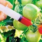 Conservanții alimentari pot afecta controlul apetitului