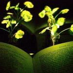 În viitor am putea citi la lumina… plantelor