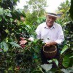 Cum se controlează pretul cafelei. Cultivatorii de cafea așteaptă să crească prețurile înainte să vândă