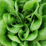 Consumul zilnic de salată și frunze verzi poate preveni demența