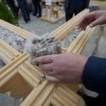 S-a găsit o solutie pentru folosirea lânii de oaie, material pentru izolarea caselor.